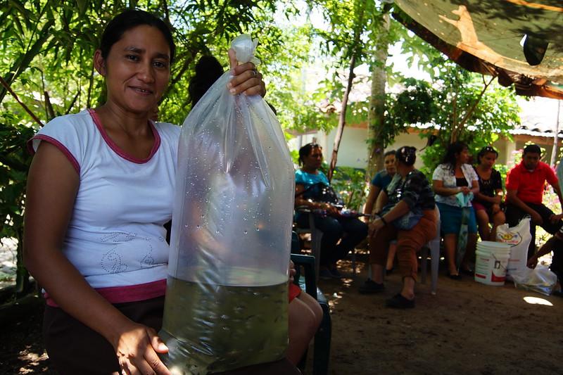 Entrega de alevines a familias de Cantón San Antonio, Usulután