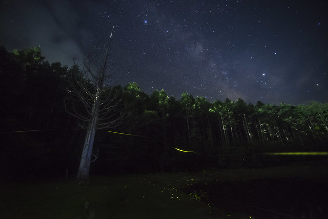Galaxy firefly in Iwana no Mori