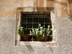 flowers behind bars