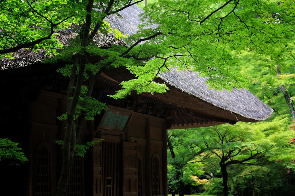 Summer Leaves At Heirin-ji