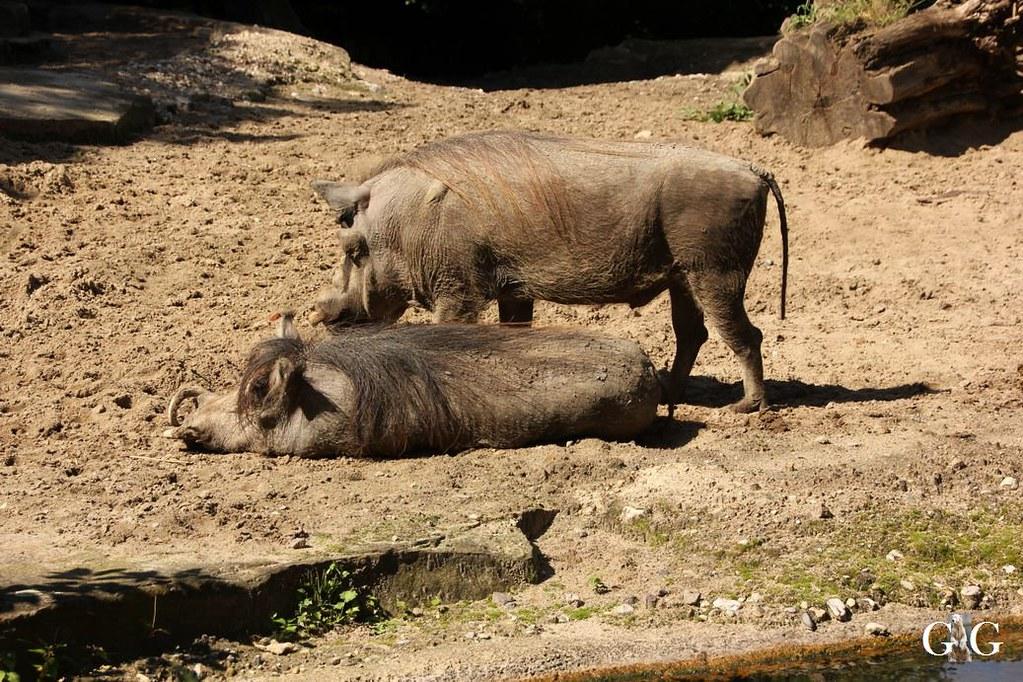 Besuch Zoo Berlin 13.08.17166