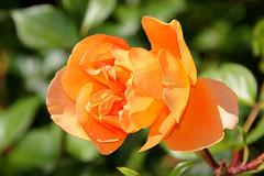 062317 Red Butte Gardens 070