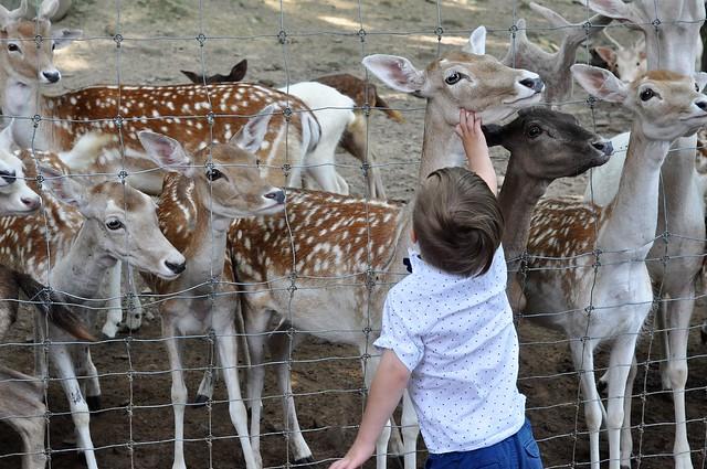 Pymatuning Deer Park