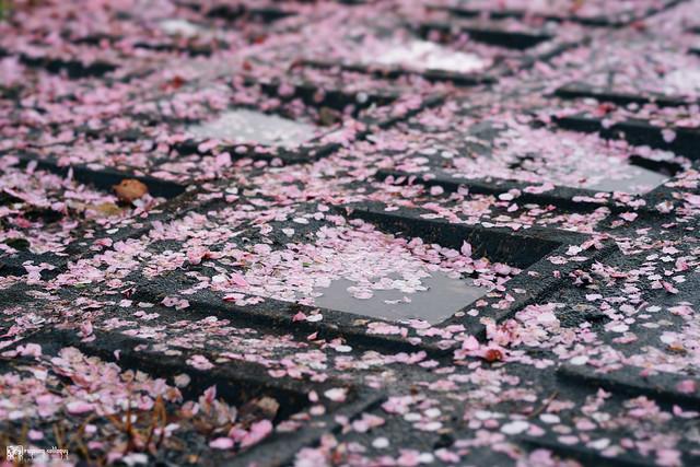 十年,京都四季 | 卷四 | 那兒春色滿城 | 24