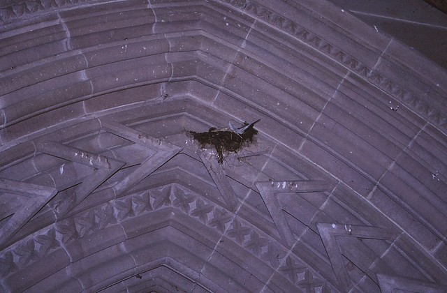 Brechin Cathedral - Swallow