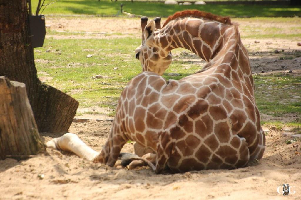 Besuch Zoo Berlin 20.07.201710