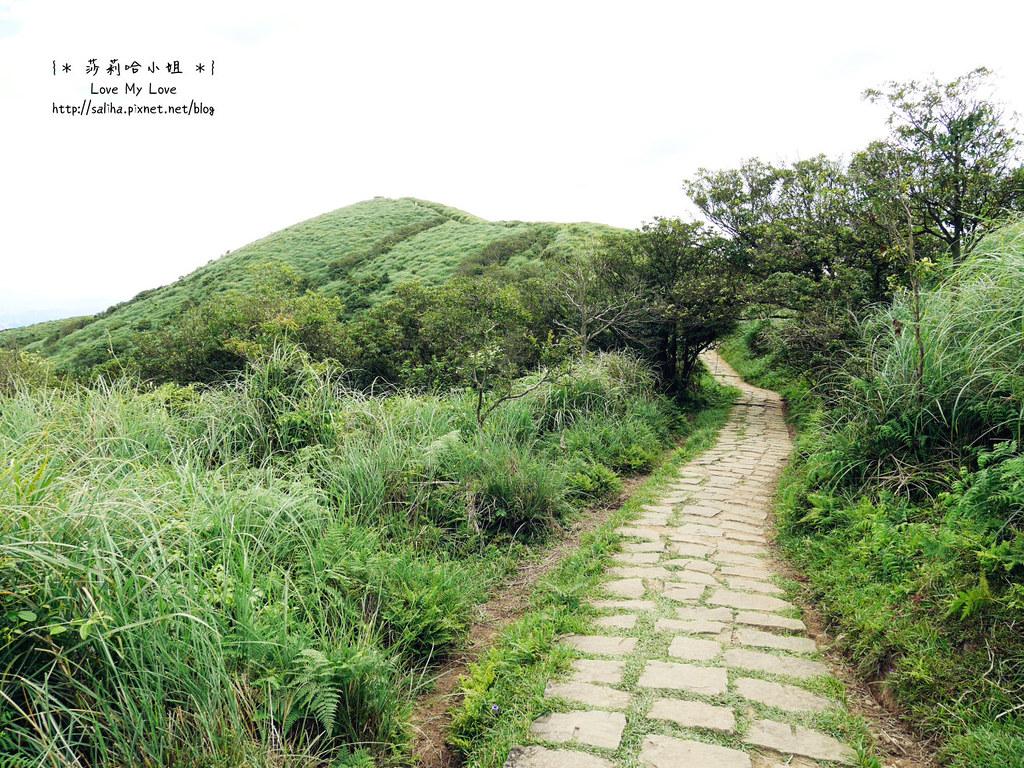 陽明山一日遊行程推薦遊記擎天崗 (5)