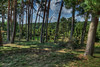 Wald by mmbottrop