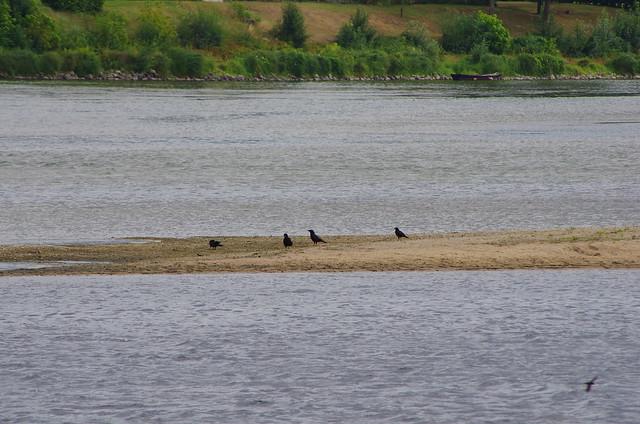 100 juillet 2017 - Candes Saint-Martin au confluent de la Loire et la Vienne, descorbeau entre les deux rivières