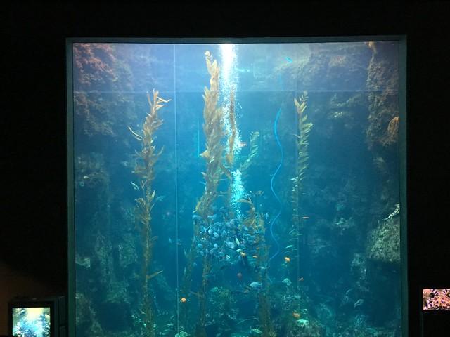 海生館巨藻之森餵食秀