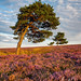 Late evening light on the North Yorkshire Moors