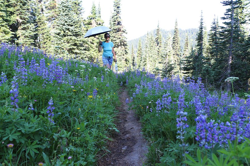 Loads of Lupines on the High Pass Trail