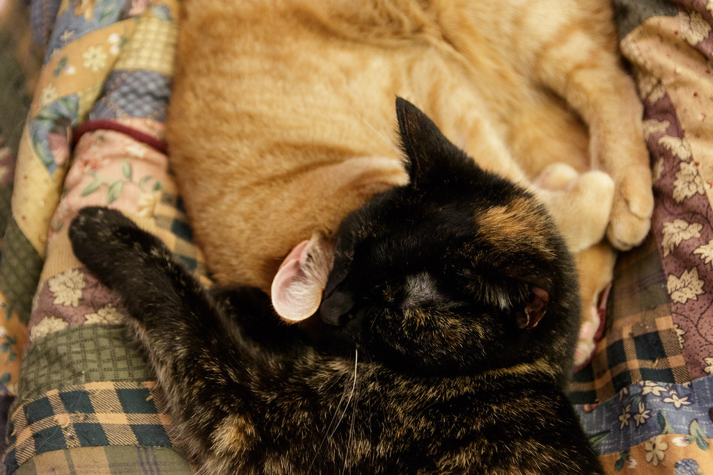 Our cat Trixie sleeps with her head on top of the head of our cat Sam