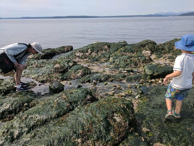 Alki Beach 2017 - Tidepools