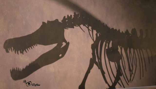 Dino au muséum