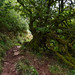 Another Walk Up Skirrid Fawr - Tangled Wood