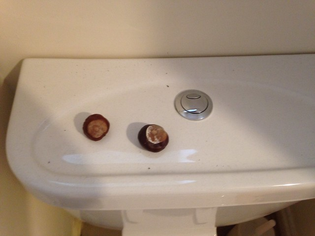 Conkers on the toilet cistern