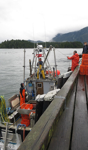 Tofino fisherman sending up crates of live Geoducks for loading into a refrigerated truck to arrive in China the next day