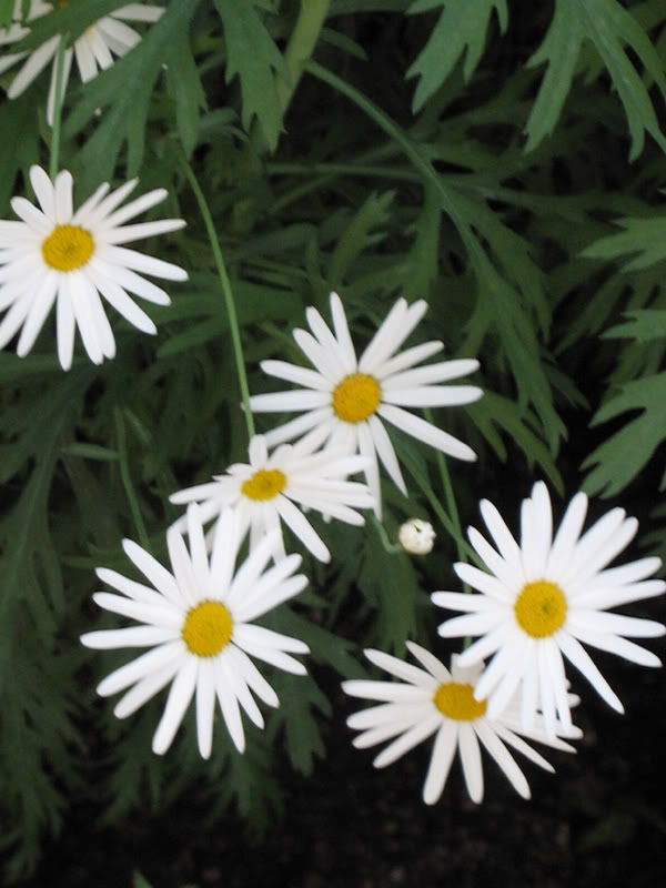 Flower2.jpg-original