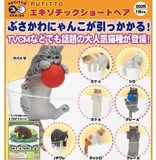 奇譚俱樂部 PUTITTO 新款「杯緣貓」超人氣新登場! エキゾチックショートヘア