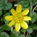 6 Lesser Celandine Firhall, Nairn 120317
