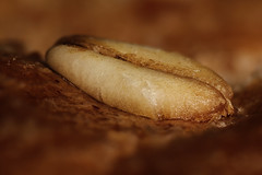 macro mondays : bread