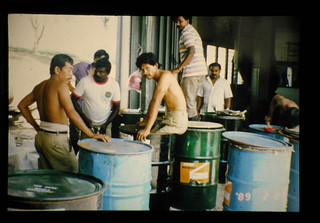 Packing Chipped Fresh Oil Palm Trunks In 200  Drums  = 細切オイルパーム幹サイレージの詰め込み作業