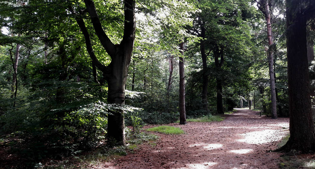 Walking near Utrecht: Beerschoten estate, Panbos trail | Your Dutch Guide