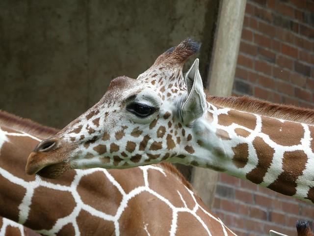 Zoo Köln