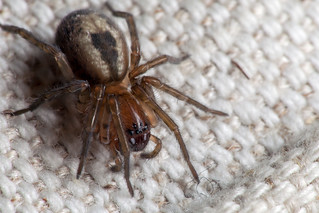 Crouching Spider - _TNY_2414