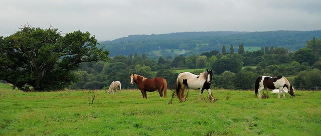 Horsing Around in the Forest of Dean!