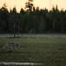 Loup de Finlande (02h06 AM) - in Explore by Samuel Raison