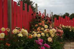 6329 Festival des dahlias - Photo of Saint-Pierre-de-Coutances