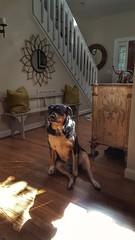 My good girl Roxie