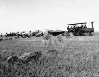 Cutting and binding by steam on Fred Engen's Farm, Saskatoon, Saskatchewan / Machine à vapeur utilisée pour la coupe et le liage à la ferme de Fred Engen, Saskatoon (Saskatchewan)