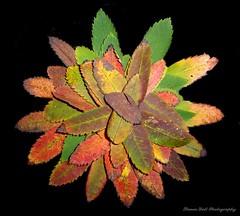 leafs (2)