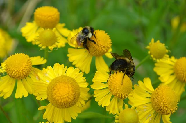 Pollinating hind legs