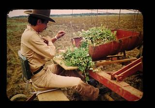 南米における熱帯草地の改良