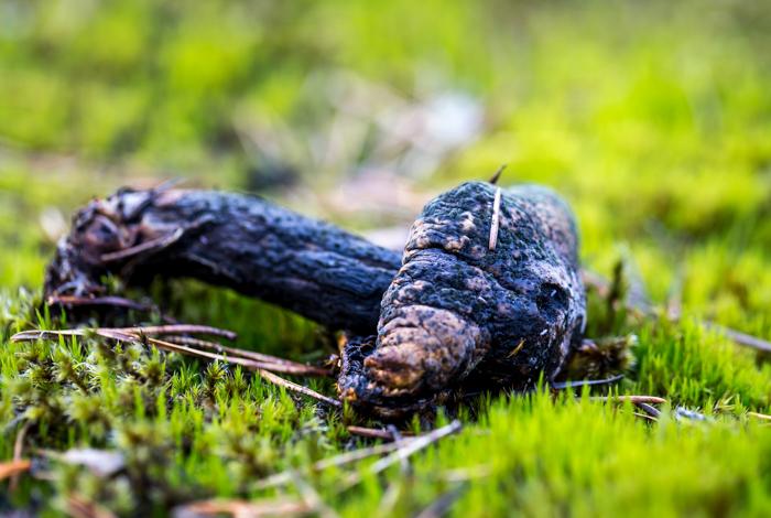 syksy syyskuu mädäntynyt sieni mätä (1 of 1)