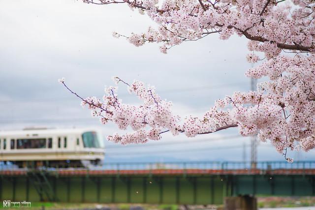 十年,京都四季 | 卷四 | 那兒春色滿城 | 26