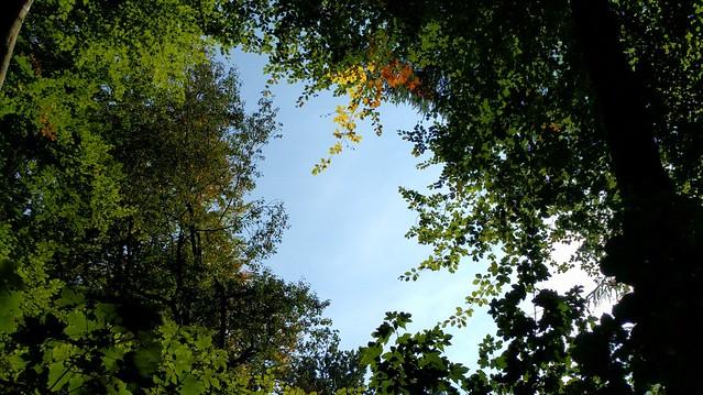 boswandeling herfst