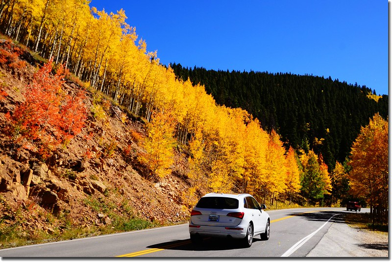 Fall colors, Mount Evans Scenic Byway, Colorado (49)