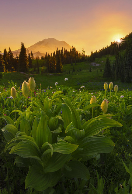 Sunset in the Mountains (Mt Rainier NP, WA)