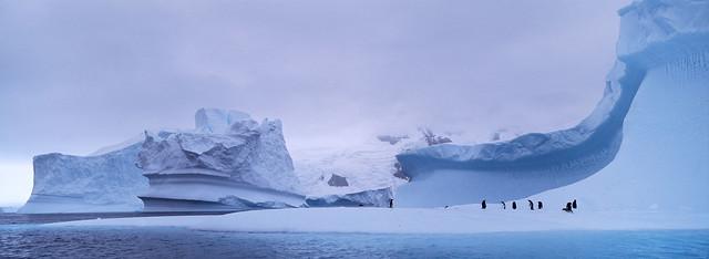 11-002-penguins