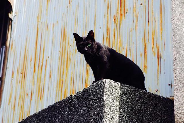Today's Cat@2017-08-13