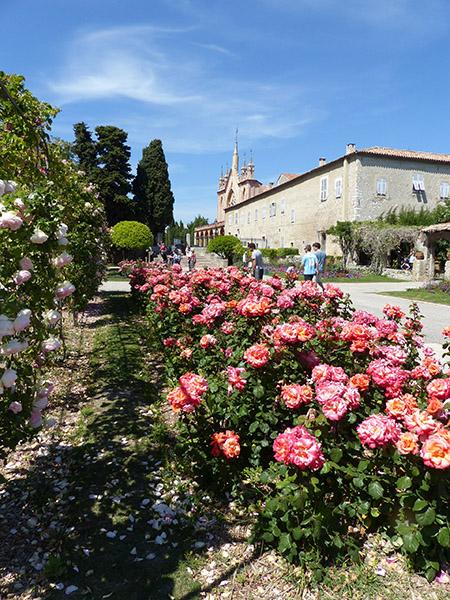 roses monastere cimiez