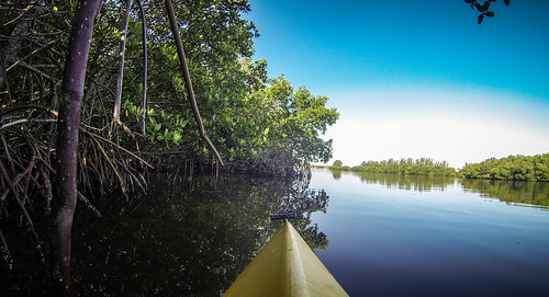 Indian River Paddling-13