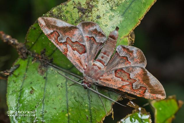 Moth - DSC_8254