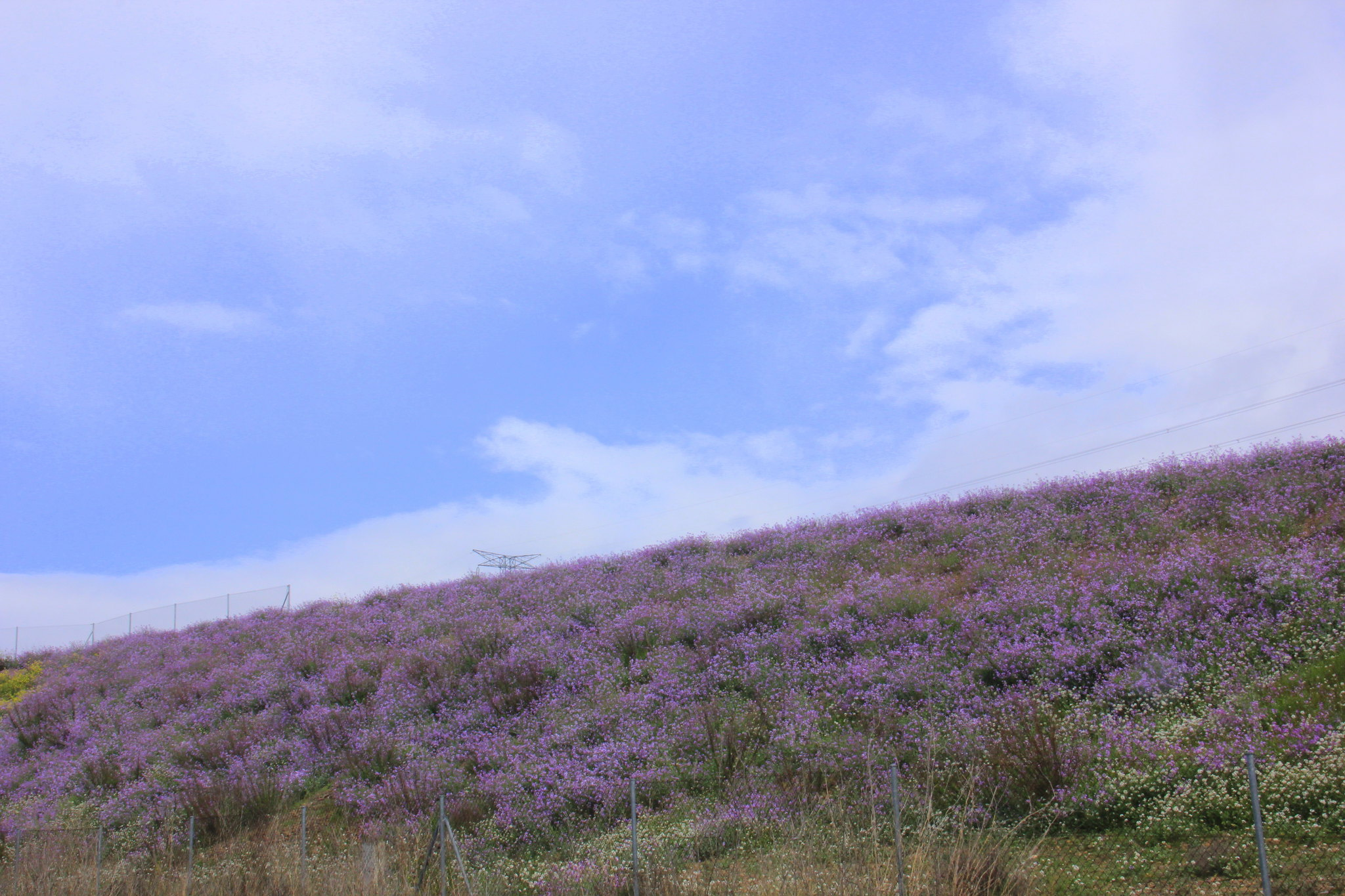 The flower filled countryside of Saragossa