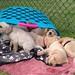Outdoor Puppies..x